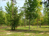 Kershaw County Lots and Land